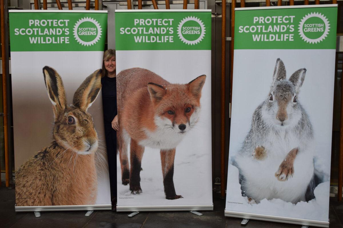 Protect Scotland's wildlife - mountain hares and fox